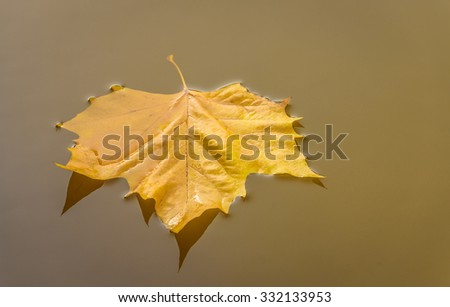 An Autumn leaf floating on water could be used as a print or similar, lovely colours