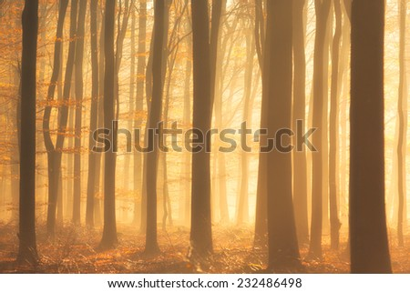 An autumn morning with beautiful light, fog and colors in the forest