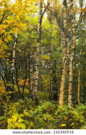 An autumn photo of the forest