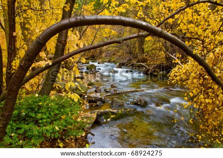 An autumn River Birch tree arches over a mountain stream - Big Cottonwood Creek, near Salt Lake City, Utah - stock photo
