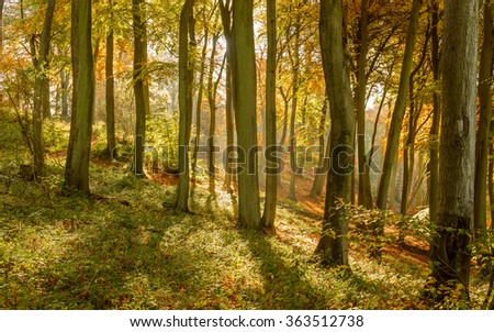 An autumn scene in the woods with the sun streaming through the misty interior