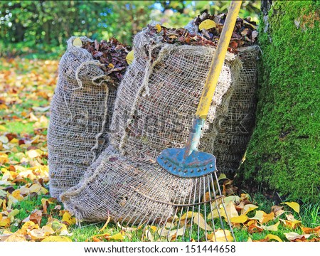 An autumn scene with sacks of leaves and a leaf rake leaning against a tree surrounded by leaves on the grass - stock photo