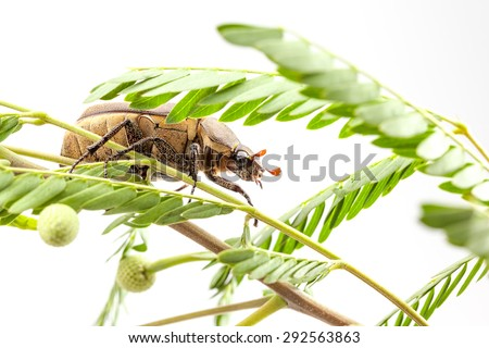 an beetle on the branch in close up