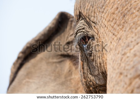 an close up of an eye of an old elephant - stock photo