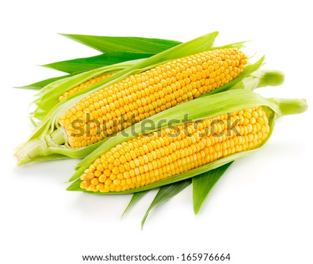 An ear of corn isolated on a white background  - stock photo