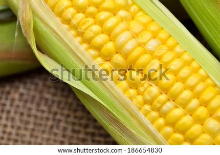 An ear of corn on gunny - stock photo