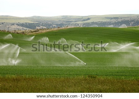 An early morning view of a hand line sprinkler system in a farm field. - stock photo