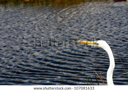 An egret head by the edge of a lake