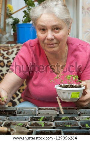 An elderly woman takes care of the seedlings