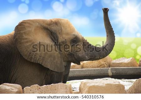 an elephant lift up it hose