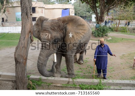 An Elephant (Suzi) which died because of acute pain in her leg, while welcoming visitors  in Lahore Zoo, Lahore, Punjab, Pakistan on 17th April 2017