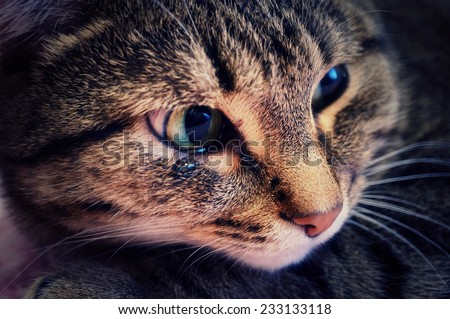 An emotional portrait of a crying cat - stock photo