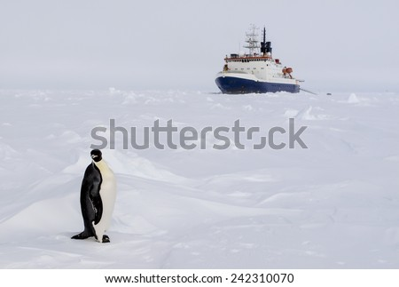 An emperor penguin standing in front of a polar ice breaker research vessel - stock photo