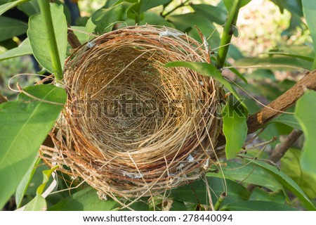 An empty bird nest with tree branches