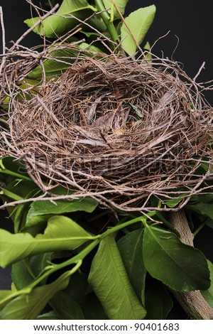 An empty bird nest with tree branches and black background