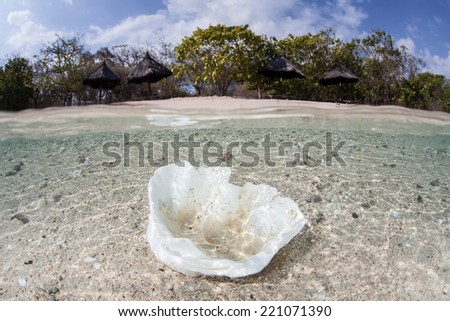 An empty giant clam shell (Tridacna sp.) lies in shallow water near a beach in Indonesia. Giant clams are often used as food by people and can be easily overfished since they are slow growing. - stock photo