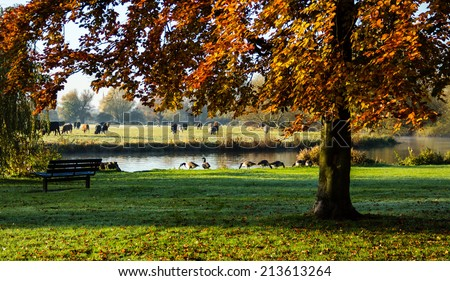 An empty park bench monitors the River Great Ouse, surrounded by colorful leaves and green grass; geese and livestock graze nearby - stock photo