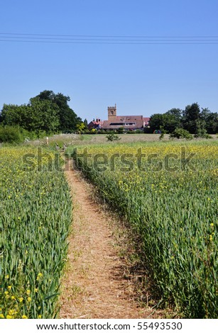 An English Rural Landscape with fields of early Wheat and Track running through Field