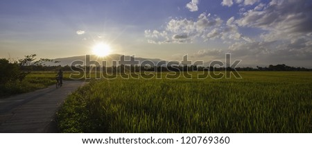 an evening - stock photo