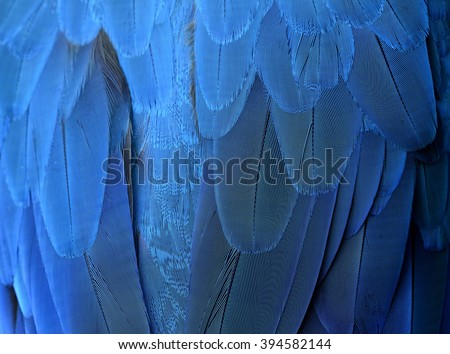 An exotic blue background, feathers of the blue-and-yellow macaw (Ara ararauna) in close up - stock photo
