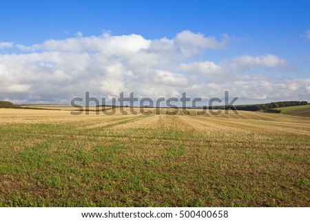 an extensive straw stubble field in rolling hills at harvest time in the yorkshire wolds under a blue cloudy sky