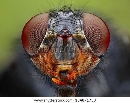 An extreme close up of a fly head taken with microscope objective. - stock photo