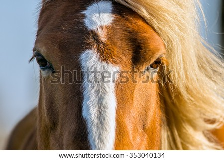 An extreme close up of a horse with light coming from one side which is lighting up one eye and her manes on the right side - stock photo