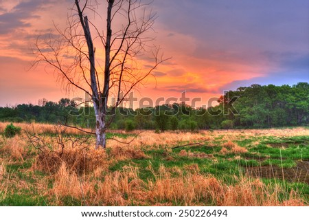 An HDR landscape of tress and a meadow - stock photo