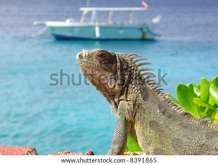 An Iguana sitting in the sun with a dive boat in the background