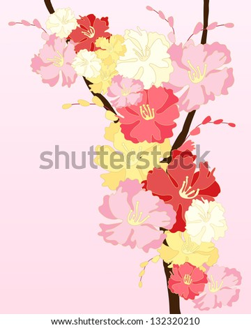 an illustration of pink white and crimson cherry blossom with buds on a pink background with space for text
