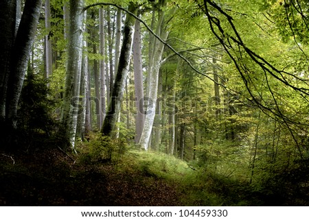 An image of a beautiful dark forest in bavaria germany - stock photo