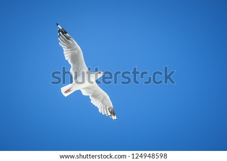 An image of a beautiful seagull in the bright blue sky - stock photo