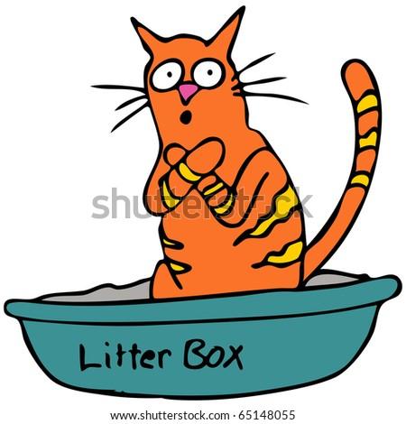 Changing Cat Litter As A Man