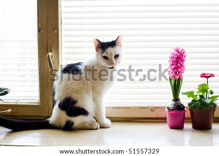 An image of a cat sitting on the window - stock photo