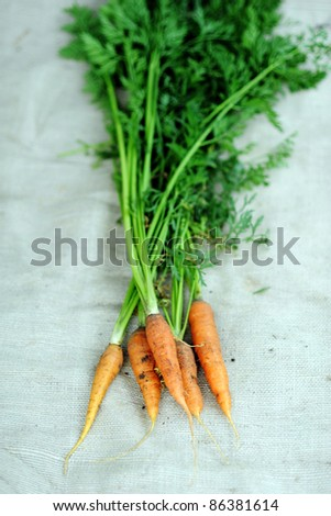 An image of a group of fresh orange carrots