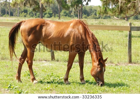 An image of a horse eating the grass
