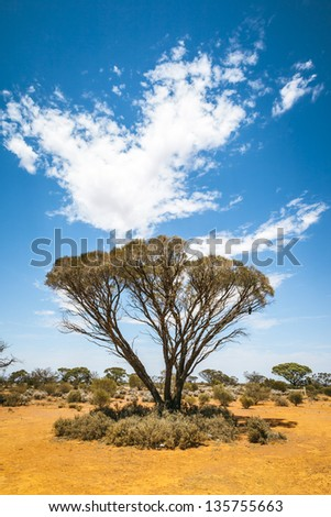 An image of a nice bush tree in south Australia