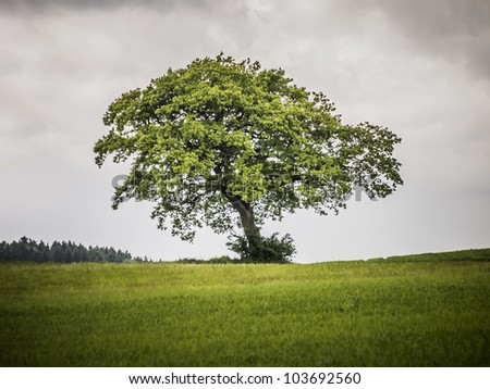 An image of a nice lonely tree