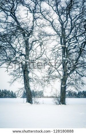 An image of a nice winter tree - stock photo