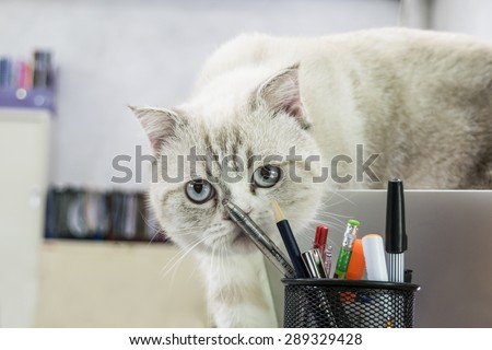 An image of a white cat playing pencils and pens - stock photo