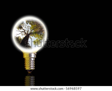 An image of an incandescent light bulb with a rainforest canopy burning in the center.