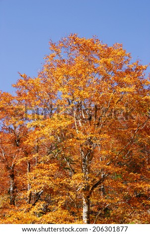 An Image of Autumn Leaves