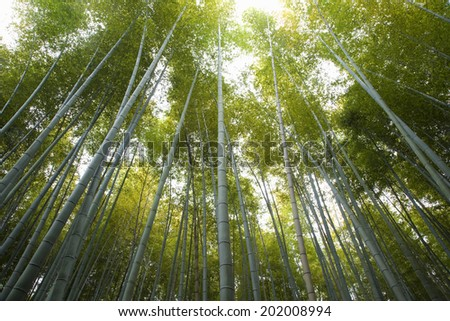 An Image of Bamboo Forest - stock photo
