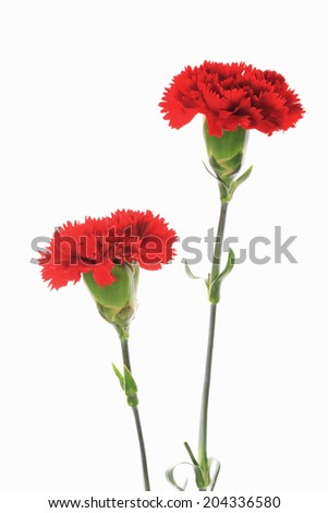 An Image of Carnation