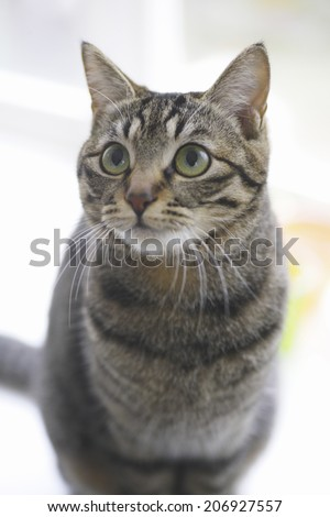 An Image of Cat