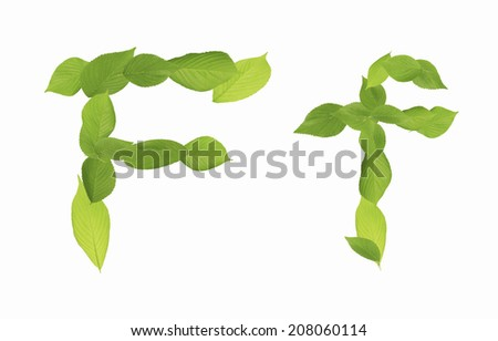 An Image of Character Of Leaves