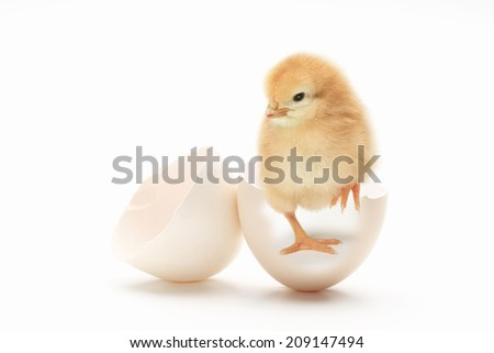 An Image of Chick