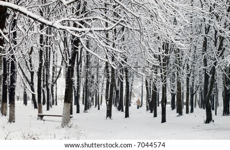 An image of cover of snow in a park