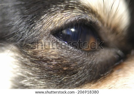 An Image of Dog'S Eyes