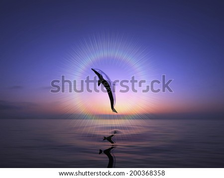 An Image of Dolphin